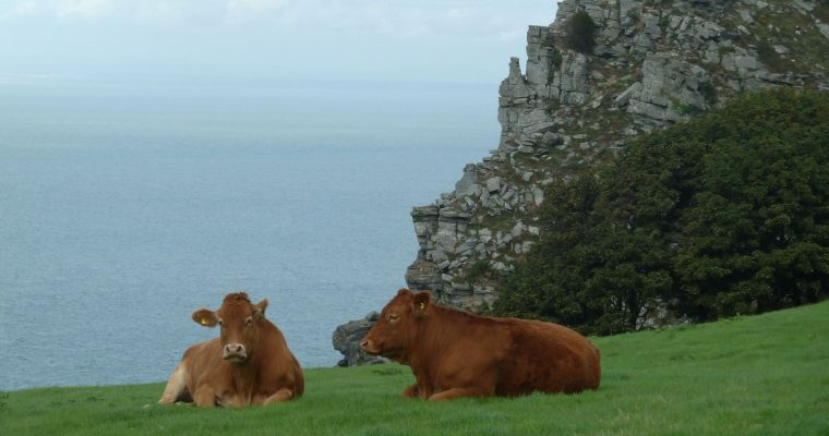Things to do in our part of Devon